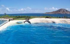 Preview wallpaper sea, beach, dolphin