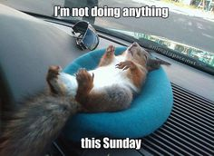 Squirrel chilling out: I'm not doing anything this Sunday