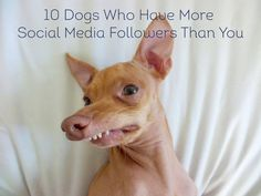 10 social media famous dogs we're 100% obsessed with!