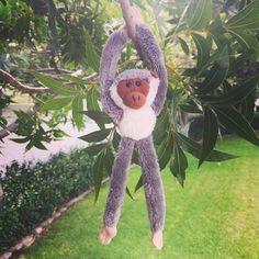 Green monkey! #oxbridgeacademy #oxbridgeacademysa #obi #distancelearning #collegemascot #mascot #studybuddy #support