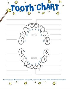 Printable tooth chart yahoo search results tooth fairy ideas