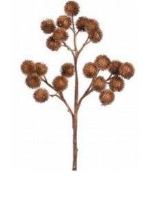 Brown thistles