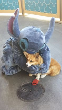 My two favorites...Stitch and Corgis