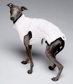Trop chic! dog clothing designer dog clothing romy and jacob dog apparel