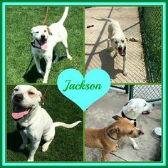 Jackson. .is #adoptable at #Joliet township animal control on Facebook.