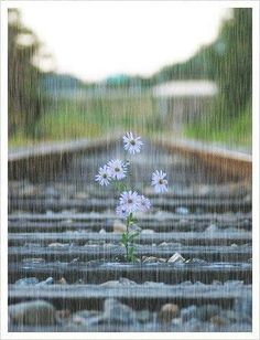 train tracks on a rainy spring day...with a bouquet that is happy for the shower...