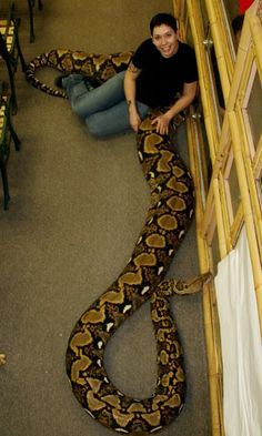 I like snakes....but this one is Not for me!