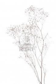 gypsophila illustration - Google Search