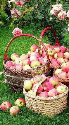 # fruit #