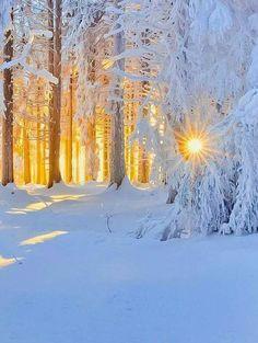 """coiour-my-world: """"winter warmth """" Winter Szenen, Winter Magic, Winter Trees, Winter Sunset, Winter Photography, Landscape Photography, Nature Photography, Travel Photography, Winter Pictures"""