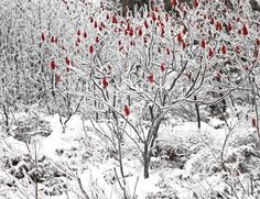Tree of Knowledge By Tumbhi Artist heather boyle