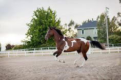 """""""Beau"""" being his amazing self in lovely Northern California!"""