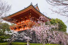 The belfry of the Ninna-ji Temple (仁和寺) during the Sakura season in Ukyo-ku, Kyoto! It was built in the early part of Edo era (1603-1868).