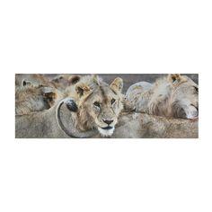 Lion Pride Yoga Mat