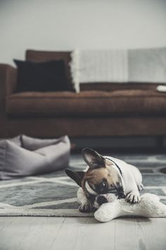 Denjo Dogs dog bone toy made from organic cotton plush. Cavalier King Charles, Doge, Dog Toys, French Bulldog, Labrador, Organic Cotton, Plush, Interior, Animals