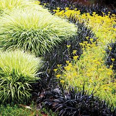 Grow a ribbon of grass Turn a grassy border on a gentle slope into a work of art. Simply plant a curving ribbon of black mondo grass betwee...