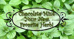 Using the chocolate mint plant from your garden! #herbgarden #gardening