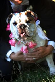 #dog #wedding Can't forget this member of the family! From The Confetti