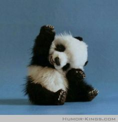 Raise your hand if you're cute.
