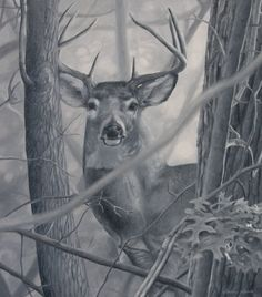 Noticed by Misted-Dream on DeviantArt Amazing Drawings, Colorful Drawings, Colorful Pictures, Pencil Drawings Of Animals, Art Drawings, Art Sketches, Hunting Drawings, Whitetail Deer Pictures, Deer Drawing