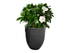 Take a look at our Valencia Round Tapered Fiberglass Planter for sale and call us today to purchase this product. You may also send us an email inquiry.