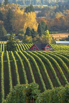 Sokol Blosser Winery in Dayton, Oregon // photo by Larry Andreasen Bodegas del Mundo. Country Farm, Country Life, Country Living, Oregon Wine Country, Cenas Do Interior, Dayton Oregon, Dundee Oregon, Oregon Usa, Gazebos