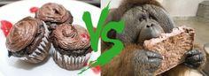 Roundup: The Great Peanut Butter Exhibition #11   Please Dessert Me!