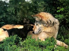 mother and cub.....