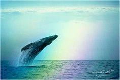 Blue Whale <3 http://animals.nationalgeographic.com/animals/mammals/blue-whale/