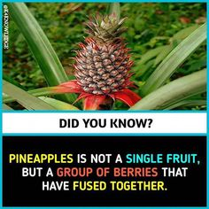Image may contain: 1 person - All the Interesting Information You're Wondering Here Interesting Science Facts, Interesting Facts About World, Some Amazing Facts, Unbelievable Facts, Wow Facts, Real Facts, Random Facts, Biology Facts, Psychology Fun Facts