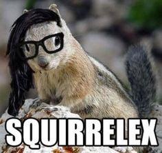 skrillex funny squirrel