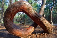 The dancing forest Crooked Forest, Pine Tree, Planet Earth, Amazing Nature, Planets, National Parks, Sculptures, The Incredibles, Architecture