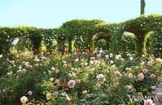 Oprah Winfrey's Rose Garden - The Glam Pad