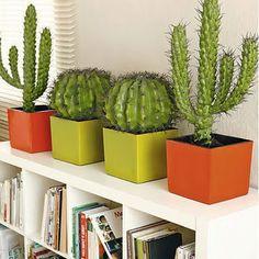 Mrs Boho: Objeto de deseo: I ♥ cactus