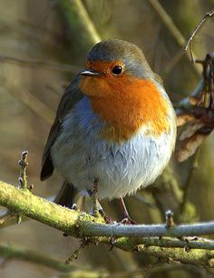 robin by phil morgan