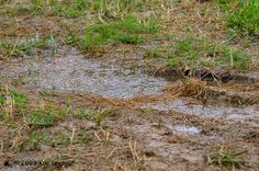How I Solved Drainage Problems In My Yard Pt 1