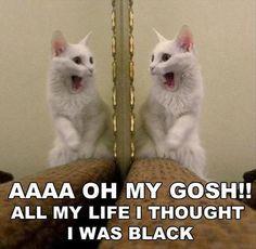 Random Funny Pictures – 40 Pics