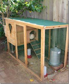 backyard chicken coop doc woody