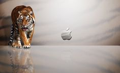 Apple Tiger HD Wallpaper