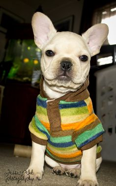 don't I look so handsome in my new shirt?