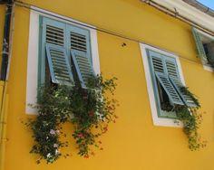 Yellow and Flowers, Mali Losinj Island, Croatia