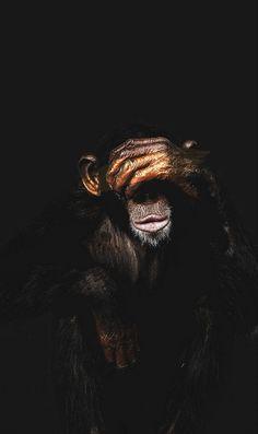 Monkey Speak No Evil Wallpaper - PosterJunkie Wild Animals Photos, Animals And Pets, Funny Animals, Cute Animals, Monkey Wallpaper, Animal Wallpaper, Nature Wallpaper, Mundo Animal, My Animal