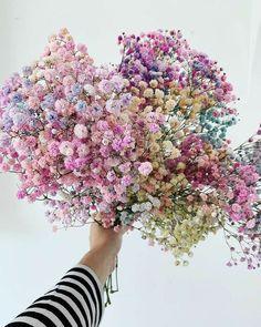 Corporate Flowers, Luxury Flowers, Gypsophila, Flower Aesthetic, Dried Flowers, Dahlia Flowers, Bridal Looks, Rapunzel, Flower Power