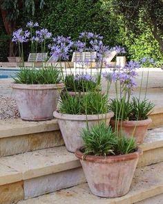 Terracotta pots or Agapanthus pots on the terrace # Te .- Terrakotta-Töpfe oder Agapanthus-Töpfe auf der Terrasse # Terrasse # ländlich… Terracotta pots or Agapanthus pots on the terrace # Terrace # Rural garden # Ideas # gardendeco -