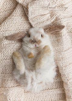 bunny + knit + lop-eared
