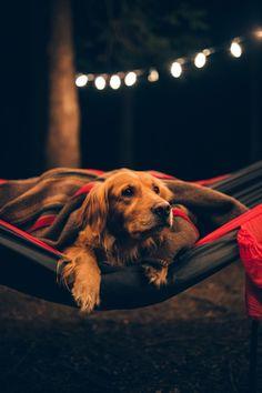 It's a Man's World — © Torrey Merritt Cute Dogs, Cute Babies, Cute Dog Wallpaper, Prabhas Pics, Its A Mans World, Virat Kohli, Cute Little Animals, Man Stuff, Wild Life