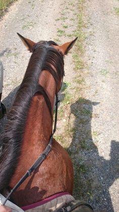 Ausritt genießen - Ceren - #Ausritt #Ceren #genießen - Ausritt genießen - Ceren Tumblr Photography, Horse Photography, Street Photography, Horse Photos, Horse Pictures, Bff Pictures, Summer Pictures, Beautiful Horses, Animals Beautiful