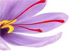7 Best Saffron Extract Images Saffron Extract Saffron Extract
