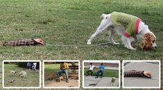 Guerilla Marketing Hundefutter