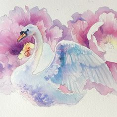 "1,475 kedvelés, 14 hozzászólás – Anna Bucciarelli Studio (@anna.m.bucciarelli) Instagram-hozzászólása: ""Quick #swan #watercolor before I go for a run and visit the real swans on the lake Watercolors by…"""